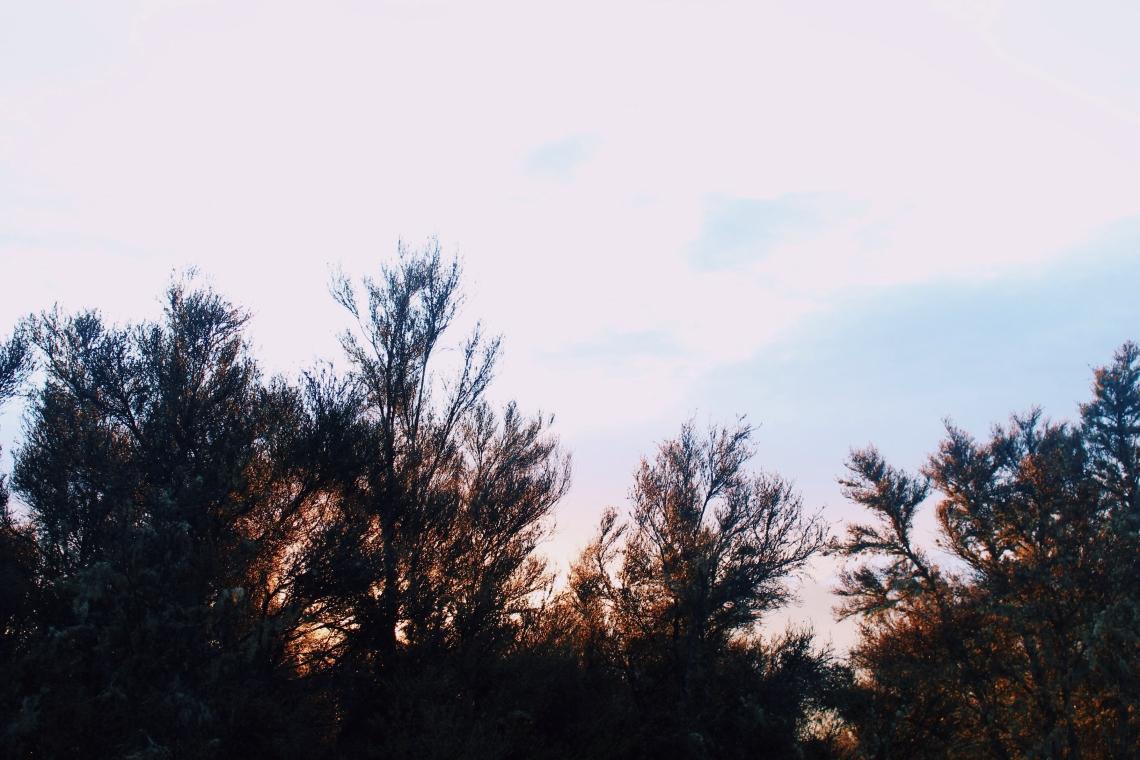 JPEG image-4AF19F626800-1